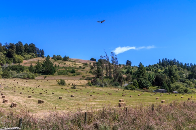 Farm Off of Bodega Highway, Sebastopol, CA, U.S.A. June 11, 2017