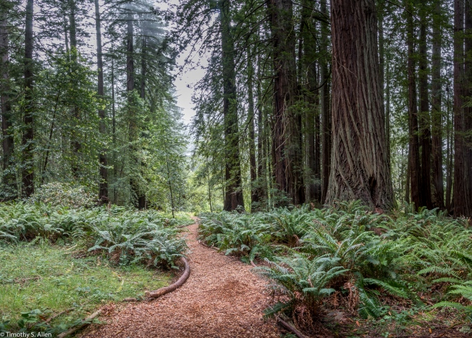 Old Grove of Trees Occidental, CA, U.S.A June 28, 2017