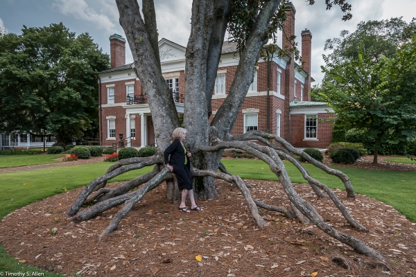 Magnificent Magnolia Tree in Front of the Newnan Coweta Historical Society, Newnan, GA, U.S.A. August 10, 2017