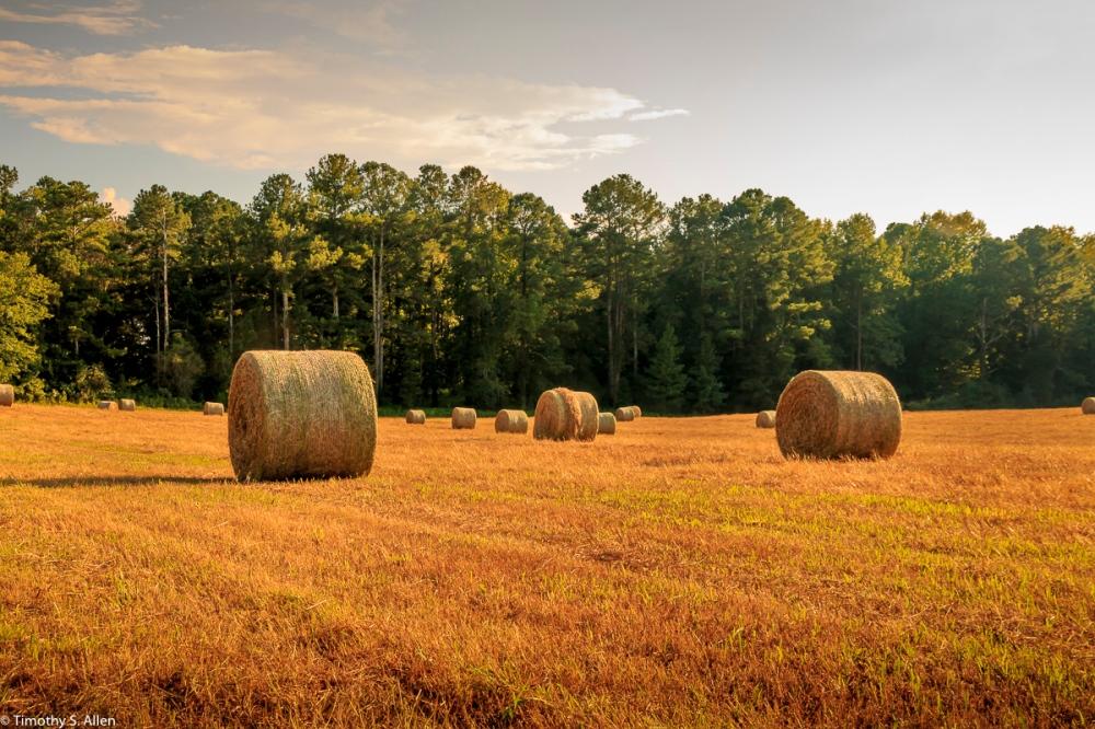 Near Lutherville, Coweta County, Georgia, U.S.A. August 22, 2017