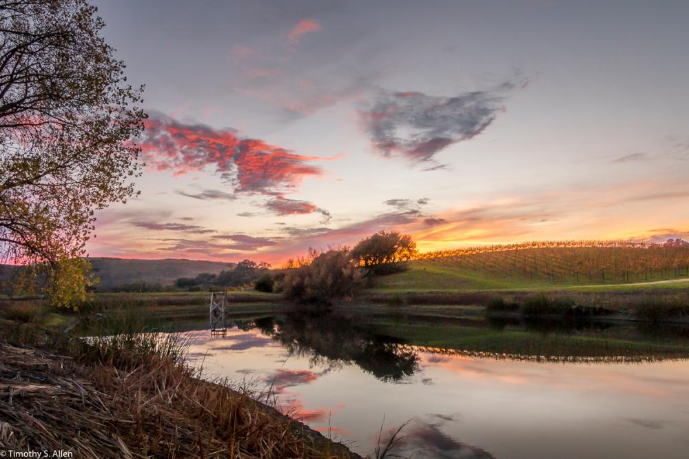 Pond and Vineyard Off of Dealy Lane, Napa County, CA, U.S.A. November 22, 2017
