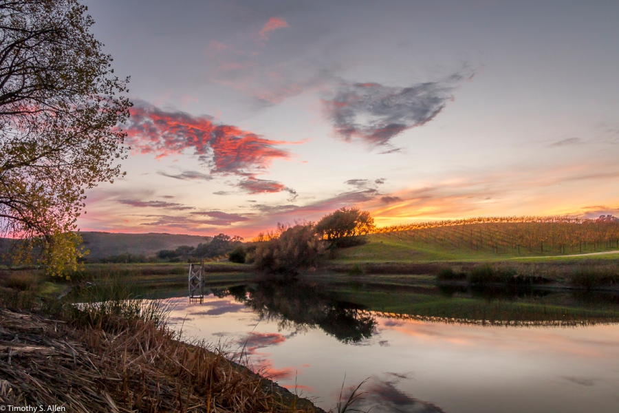 Pond and Vineyard Off of Dealy Lane, Napa County, CA, U.S.A. November 22, 2017