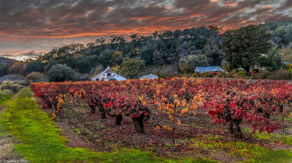 This image has had the sky changed in post production. This is a laborious process that I'd not do again. Off of CA Hwy 12 in Kenwood, CA, U.S.A. November 25, 2017