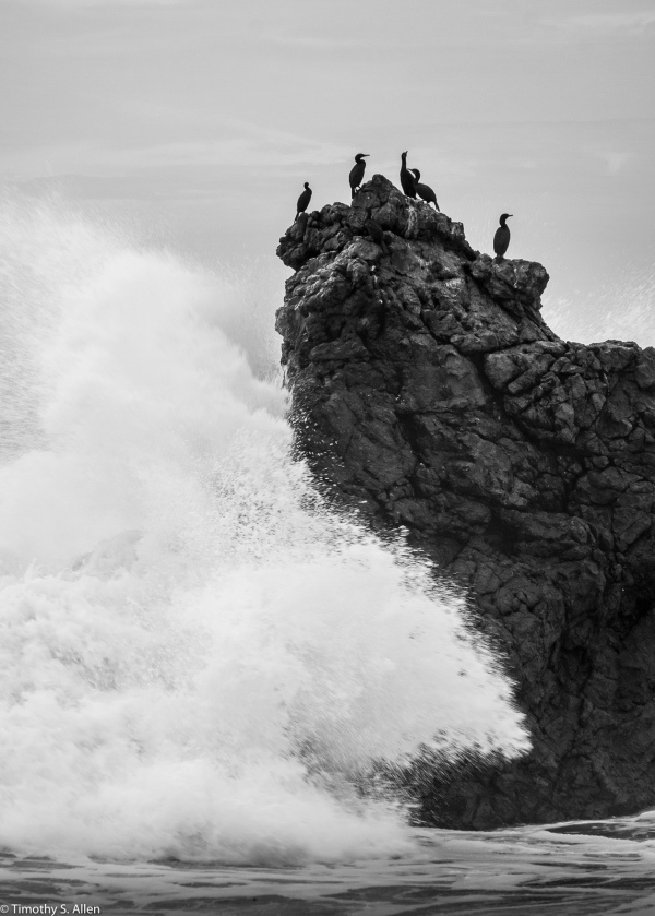 Cormorants on a Rock at Arches Beach CA Hwy 1, Sonoma County, CA, U.S.A. November 22, 2017