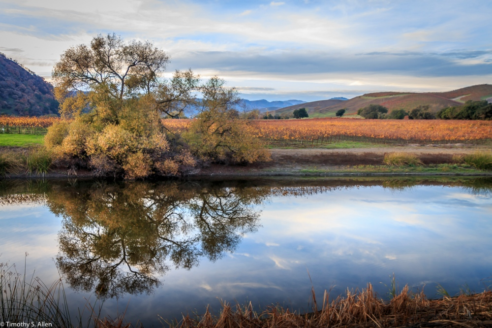 Vineyards and Pond Off of Dealy Lane, Napa County, CA, U.S.A. November 22, 2017