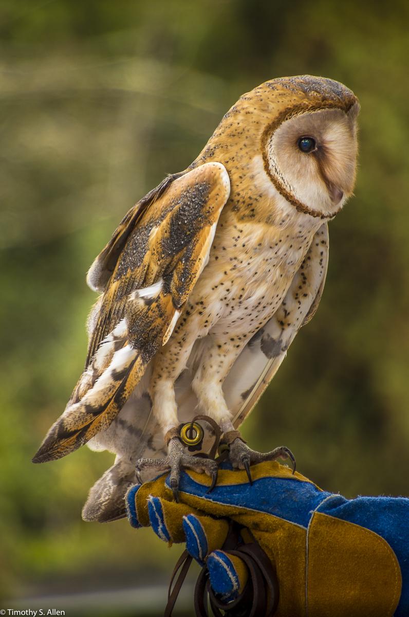 Bird Rescue Center, https://www.birdrescuecenter.org/ Santa Rosa, CA, U.S.A. December 2, 2017