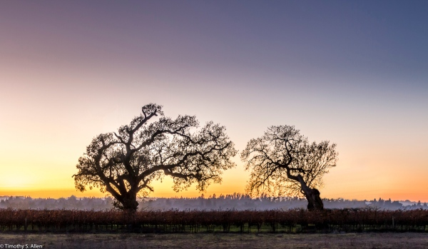 I Removed Brush and Trees to Simplify the Previously Published Image - Located Near Laguna de Santa Rosa Occidental Trail, Santa Rosa, CA, U.S.A. December 9, 2017
