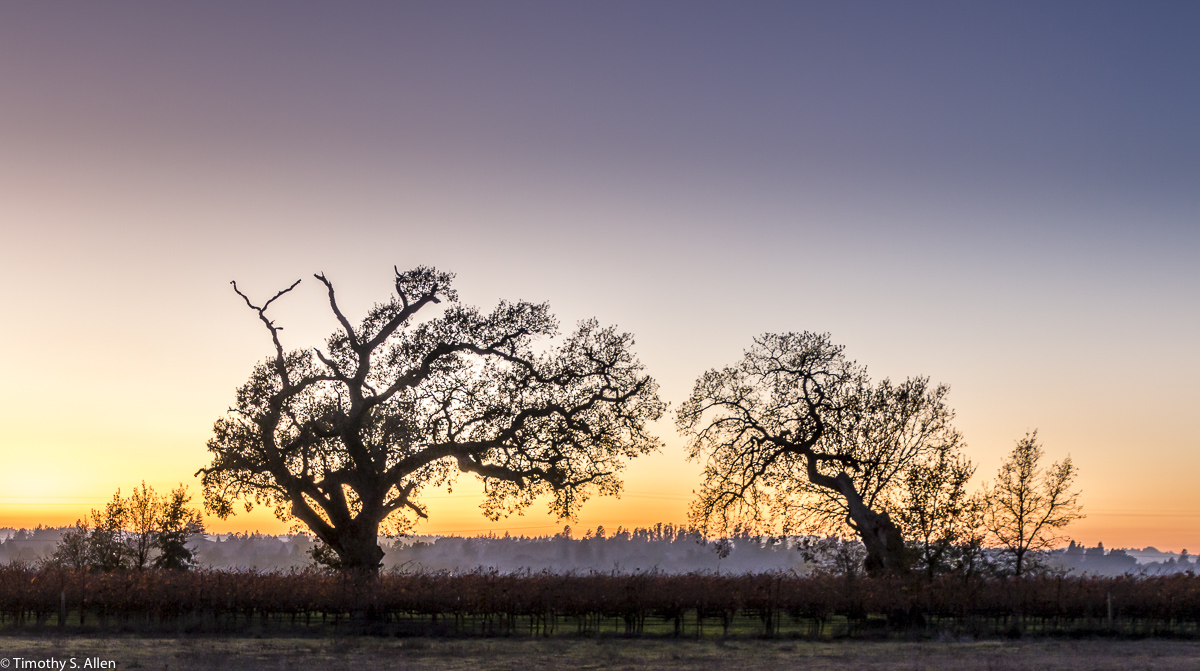 Near Laguna de Santa Rosa Occidental Trail, Santa Rosa, CA, U.S.A. December 9, 2017