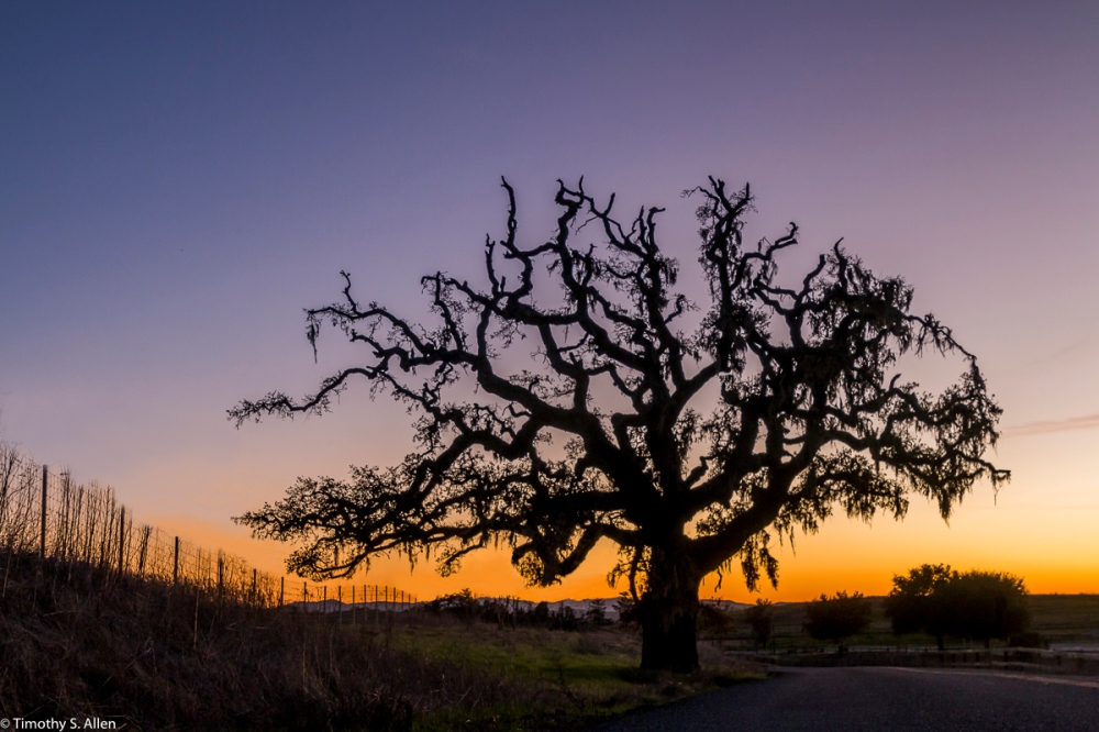 Outside Crane Creek Regional Park Rohnert Park, CA, U.S.A. December 17, 2017