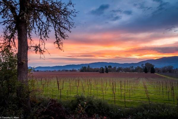 Mumm Winery Silverado Trail, Napa County January 2, 2018