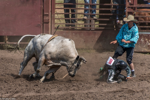 Cowboy Clown Tries to Protect the Rider Russian River Rodeo, Duncan Mills, CA, U.S.A. June 24, 2017