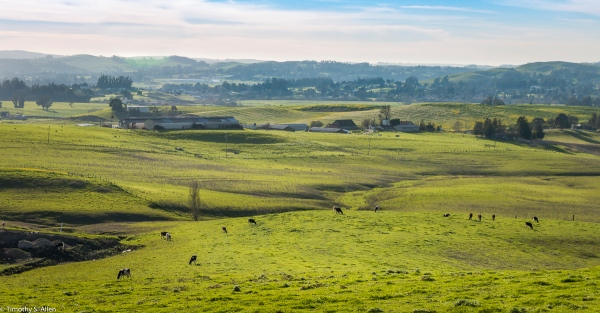 Dairy Farm in Southern Sonoma County Lynch Road, Sonoma County, CA. U.S.A. February 8, 2018