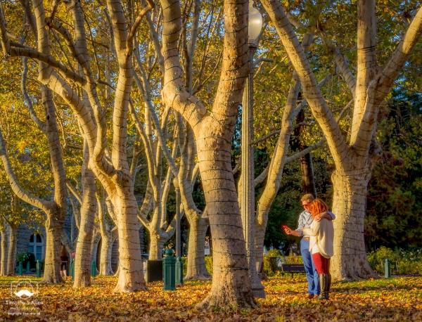 Sonoma Square Sonoma, Sonoma County, CA, U.S.A. November 22, 2014