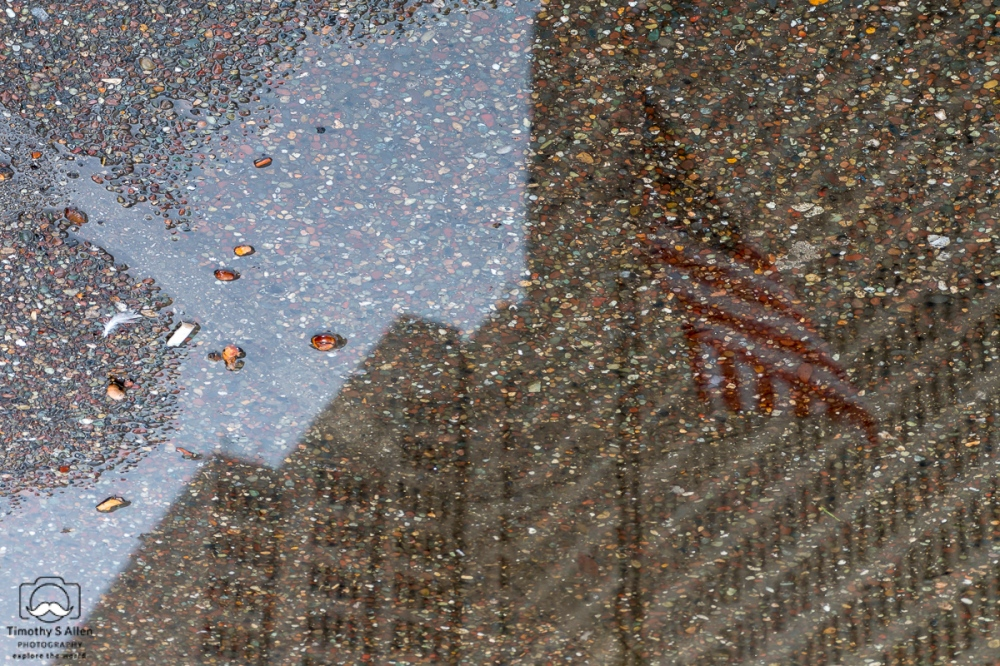 Reflections in a puddle in Sue Bierman Park near the Ferry Building, San Francisco, CA, U.S.A. March 9, 2018