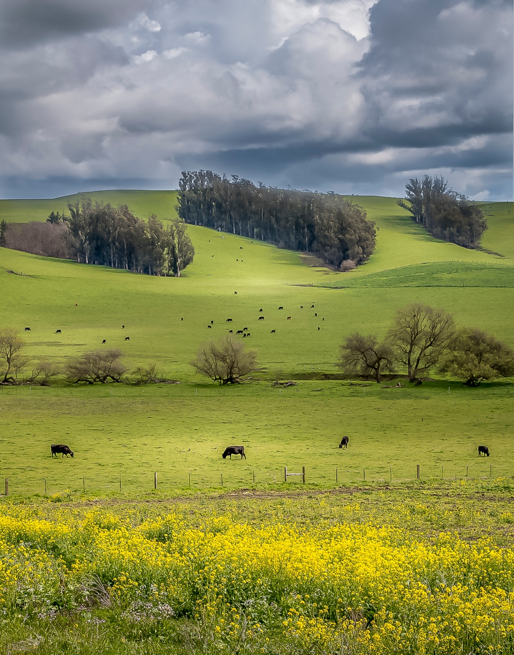 Pasture off of Bloomfield Road in Bloomfield, Sonoma County, California March 17, 2018