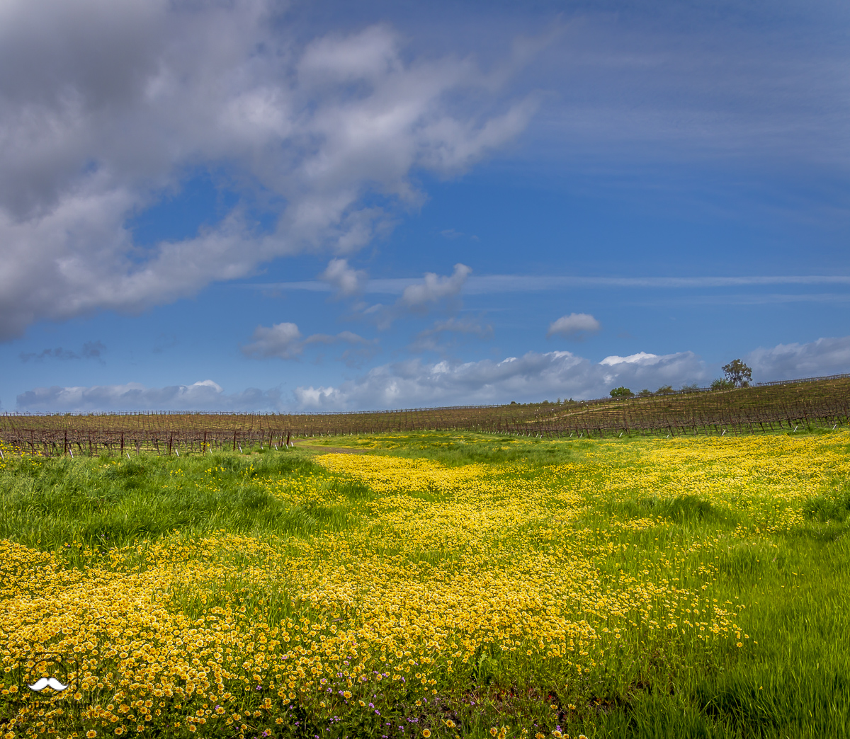 Off of County Road 95A in Yolo County, California, U.S.A. April 7, 2018