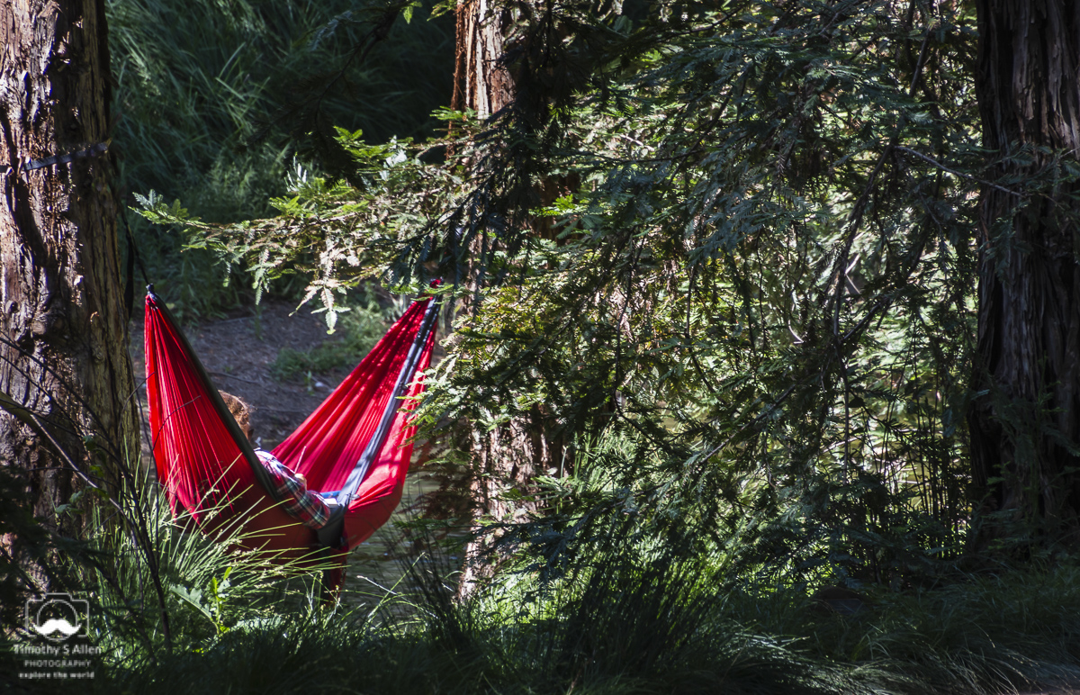 Arboretum, University of California, Davis Davis, CA June 1, 2018
