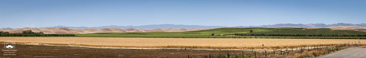 A view of wheat, vines and orchards. Taken from I-5 and County Road 8 in Yolo County, California. June 1, 2018.