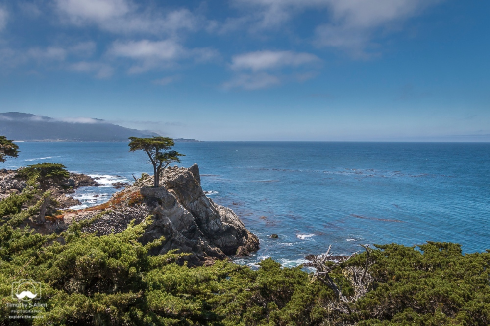 The Famous Monterey Pine. 17 Mile Drive, Pebble Beach, CA, U.S.A. June 20, 2018