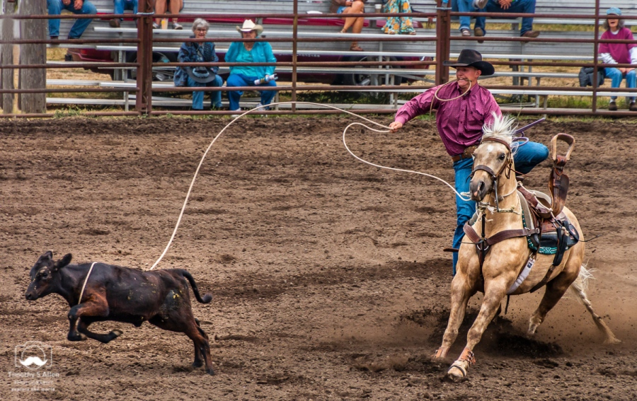 Calf roping, also known as tie-down roping, is a rodeo event that features a calf and a rider mounted on a horse. The goal of this timed event is for the rider to catch the calf by throwing a loop of rope from a lariat around its neck, dismount from the horse, run to the calf, and restrain it by tying three legs together, in as short a time as possible. Russian River Rodeo, Duncans Mills, CA, January 24, 2018.