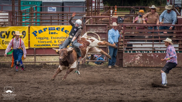 Two cowboy clowns are watching closely as this bull makes every move to dislodge this rider. Duncans Mills, CA. June 28, 2018.