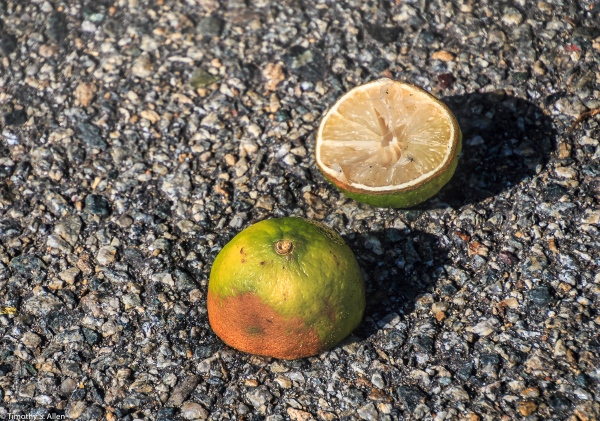 Lemon or Lime? East Boston Street Boston, MA August 31, 2018