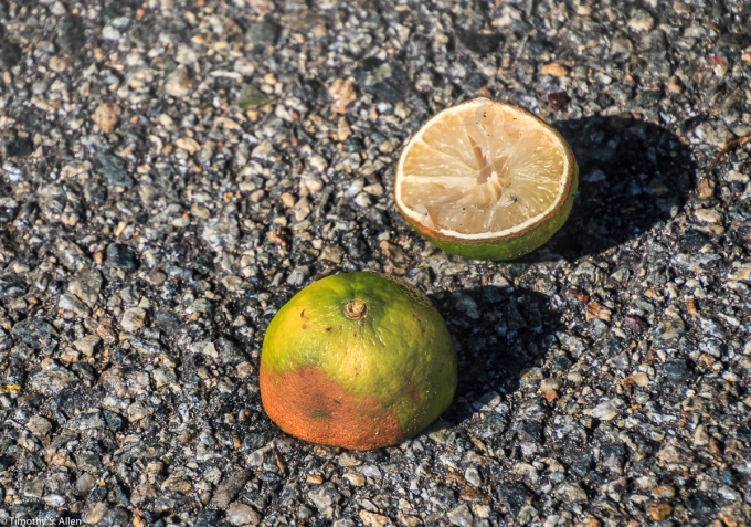 Lemon or Lime? East Boston Street Boston, MA August 31, 2018