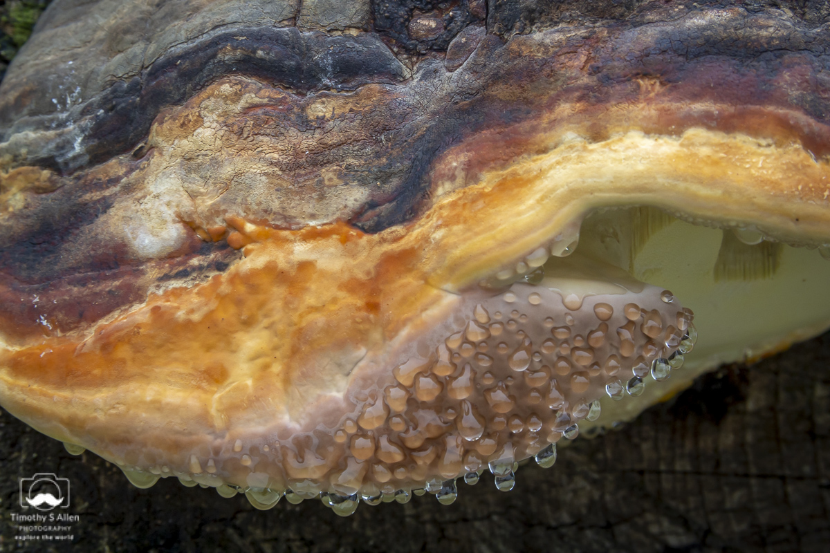 Fungus growing on the bottom of rusty equipment. Tillamook, OR, U.S.A. October 20, 2013