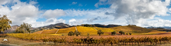 Lightroom HDR and Panoramic Sonoma Valley near Kenwood on CA 12. November 22, 2018
