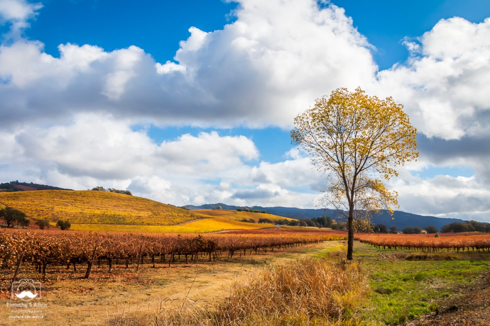 Valley of the Moon, Sonoma Valley near Kenwood on CA 12. November 22, 2018, Lightroom HDR