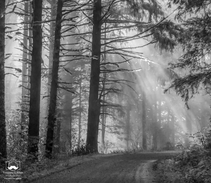 Cascade Head Forest Road, Suislaw National Forest, Oregon, October 24, 2013