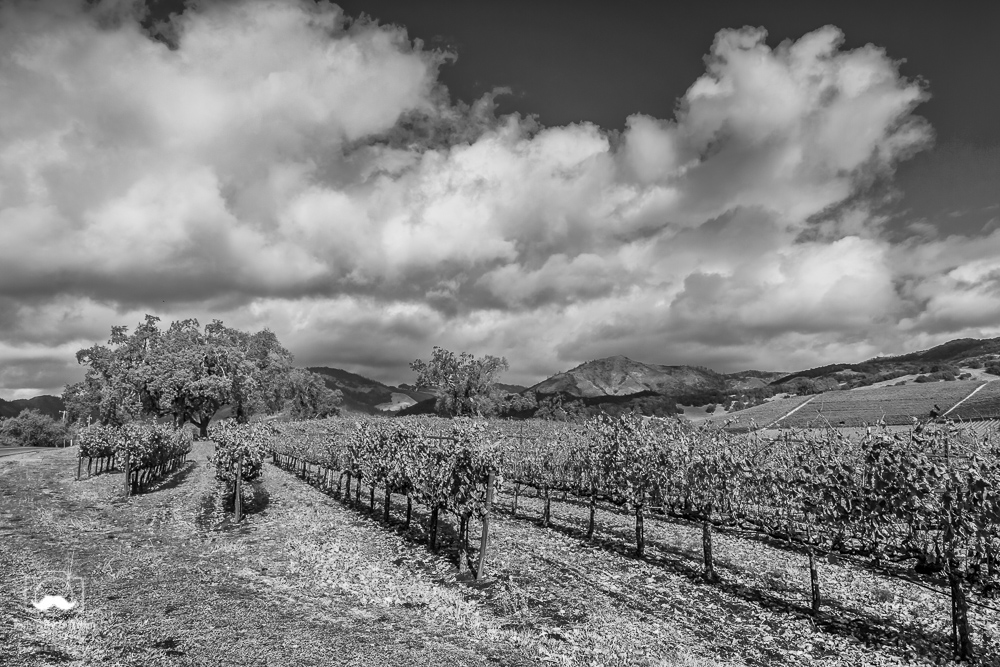 Kunde Family Winery Hwy 12, Kenwood, CA November 22, 2018