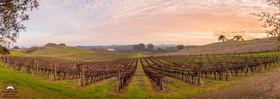 Arista Winery @AristWinery Henry Road, Napa County, CA January 27, 2019