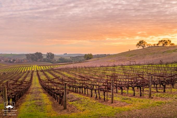 Artesa Winery @Artesa, Henry Road, Napa County, CA. January 27, 2019