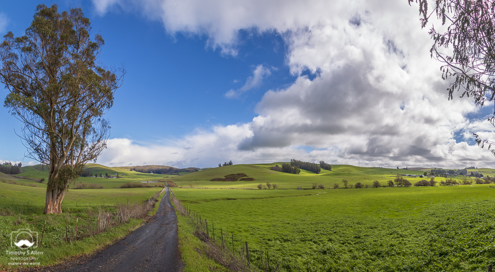 A panoramic composed from Broomfield Road looking east. Broomfield Road, Broomfield, Sonoma County, CA February 16, 2019