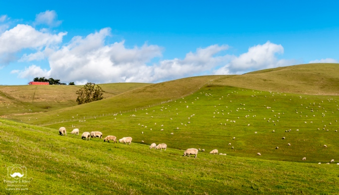 - Pastures in the Western part of Sonoma County, Middle Road near Valley Ford, CA, U.S.A. February 16, 2019.