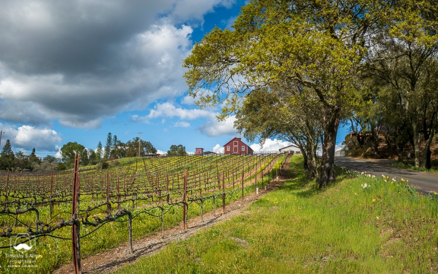 - Panoramic with my new iPhone XR. Dry Creek Road, Healdsburg, Sonoma County, CA. March 21, 2019.