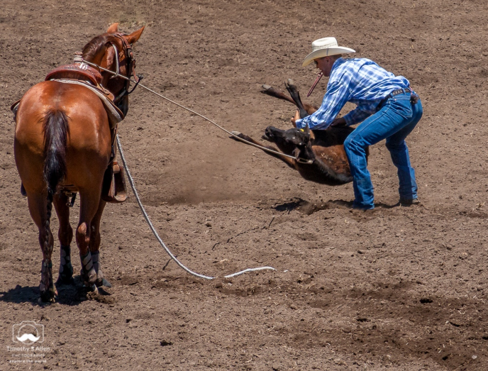 - Calf Roping - 1st, you have to Lasso the calf 2nd, you have to Carry the calf on its back 3rd, you have to Tie its legs together all in the fastest time. Russian River Rodeo, Duncans Mills, CA June 22, 2019