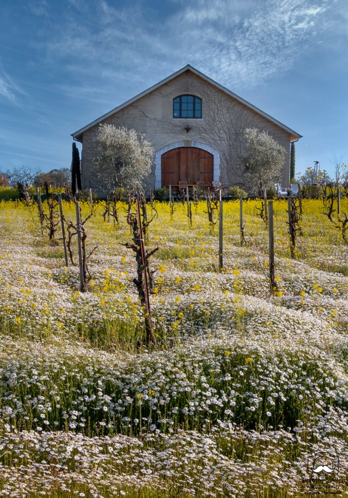 winery building with flowers in the vineyard